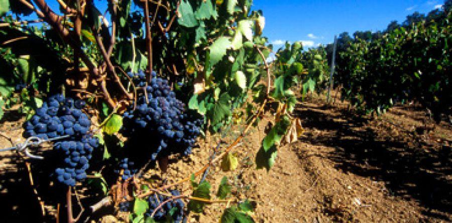 Enoregioni italiane: Sulcis e Campidano