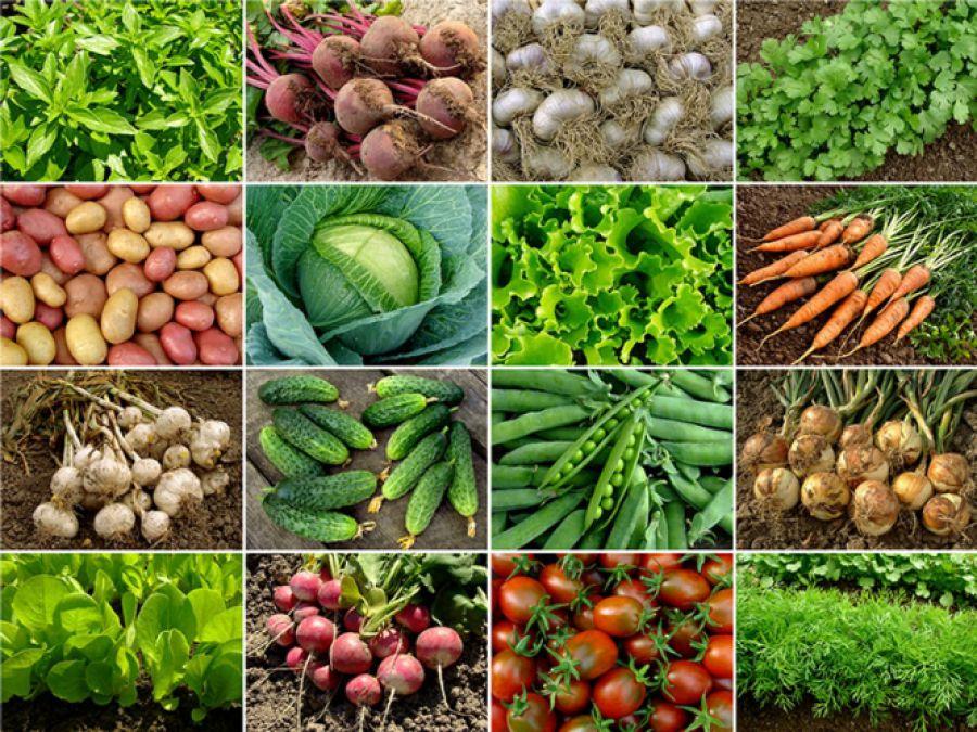 Nuove tecniche di miglioramento genetico in agricoltura
