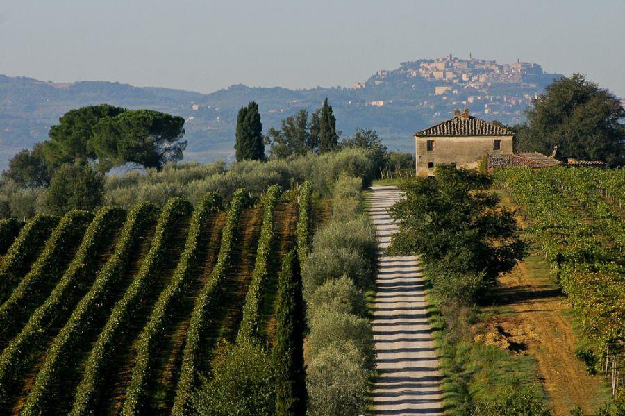 TerraNobile Montepulciano, la nuova associazione di produttori