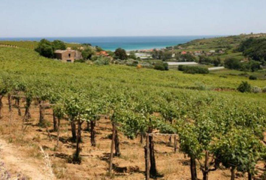 Abruzzo, Premio giornalistico internazionale Words Of Wine
