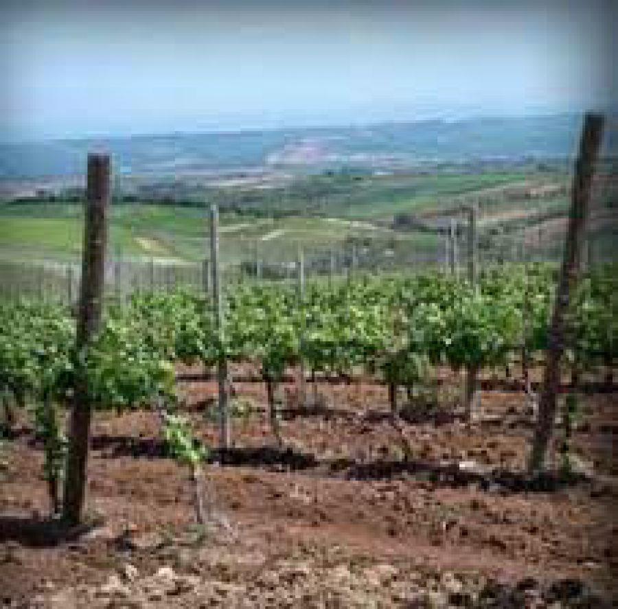 La storia del vino in Molise