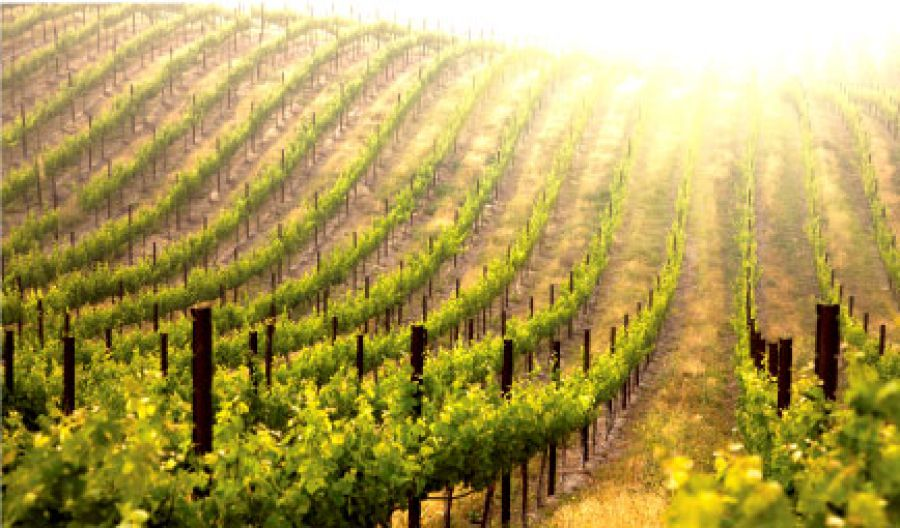 Nasce Prope, la nuova linea di vini abruzzesi