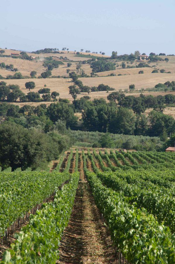 Obiettivo Germania per il Consorzio Doc Maremma Toscana
