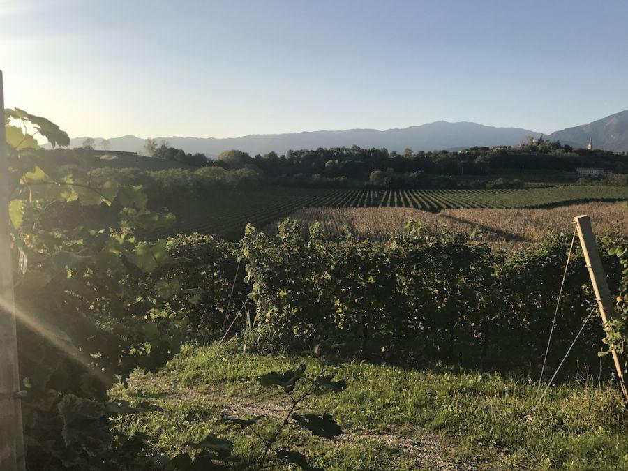 Una siepe doc lunga tutta l'Italia