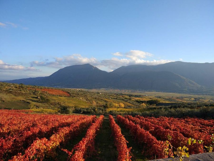 Biowine-Biological Wine Innovative Environment