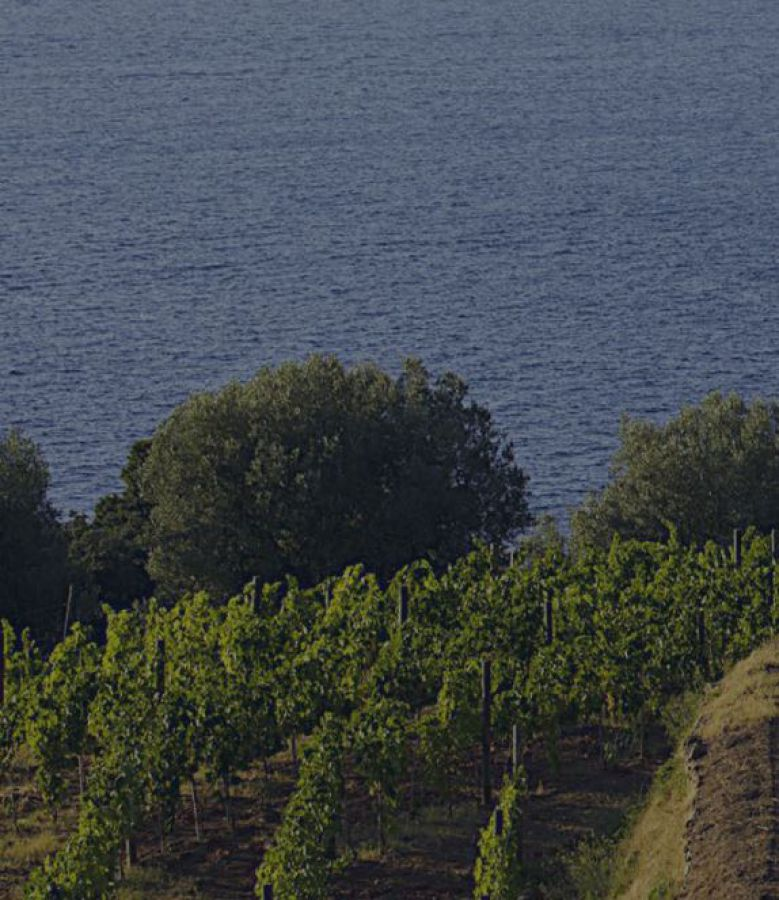 La Doc Maremma Toscana premiata a Vinitaly