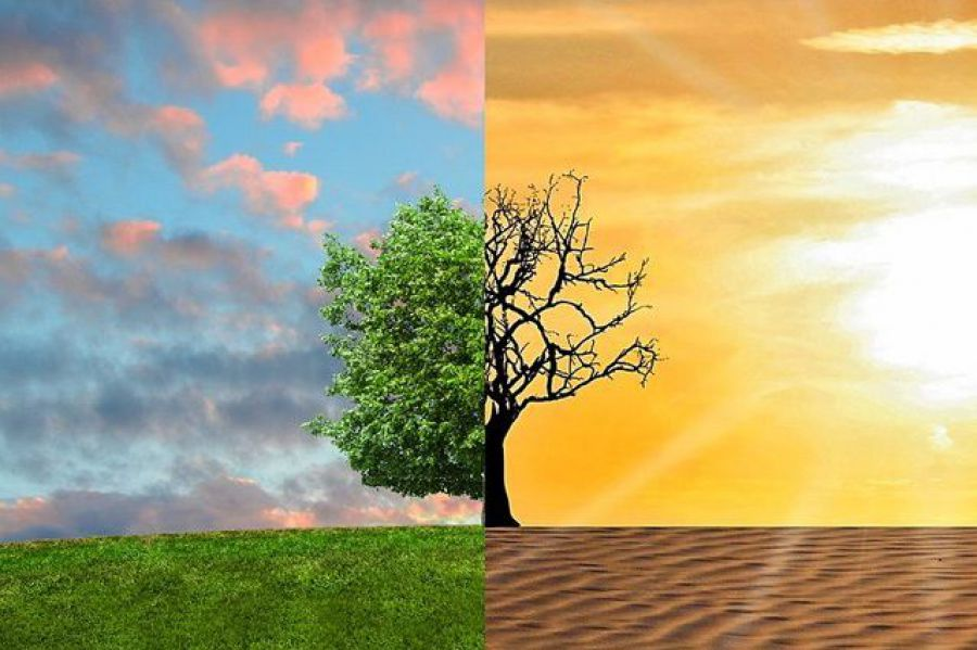 Cambiamenti climatici e coltivazione della vite