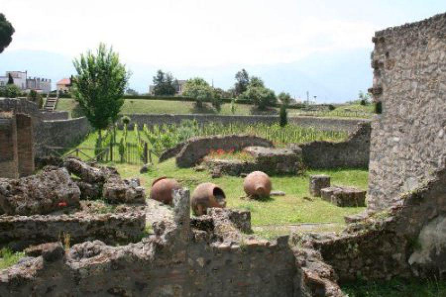 Vigneti urbani antichi e moderni: da Frascati a Pompei