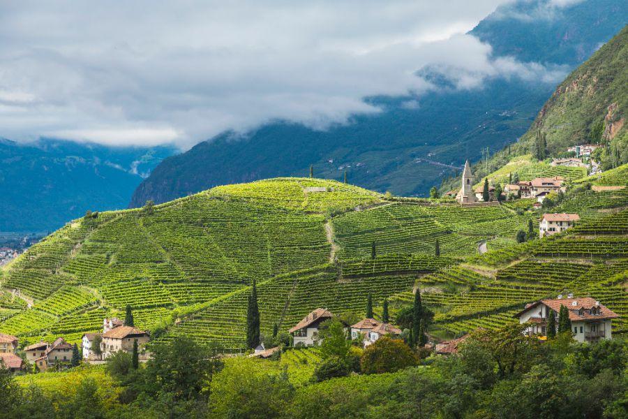 Bolzano: la città e i vigneti