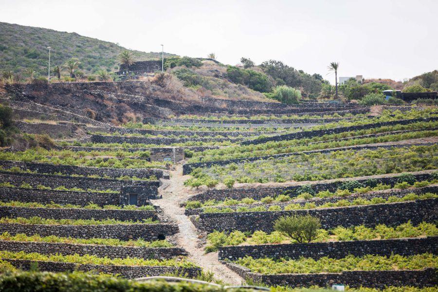 Pantelleria DOC Festival