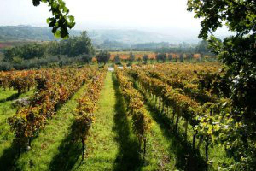 Valorizzazione dei vini vesuviani