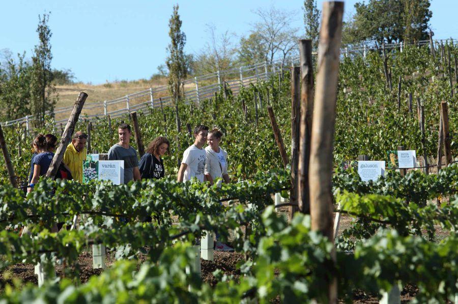 Al Rural Festival anche uva e vini di antichi vitigni
