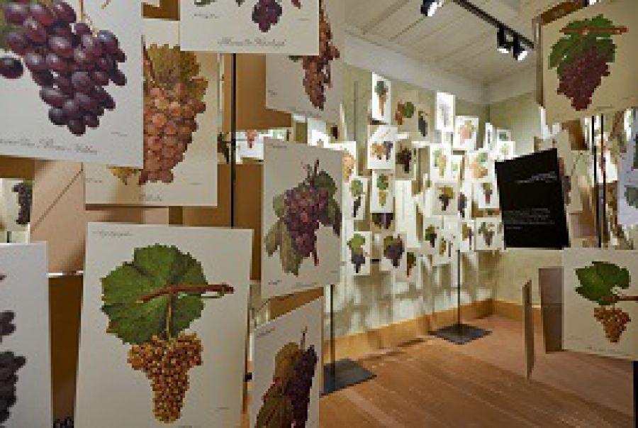 È autunno: vigneti, wine-hotel e degustazioni sul Lago di Costanza
