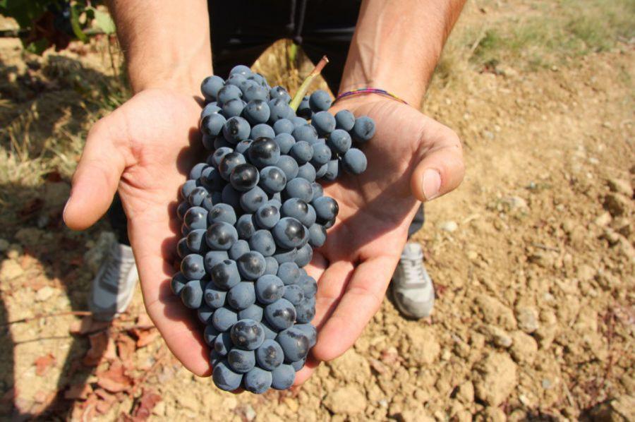Le prime stime sulla produzione vitivinicola 2018