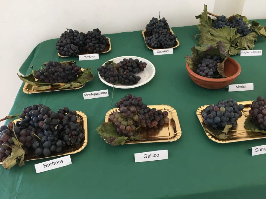 Mostra delle varietà di uva della Calabria