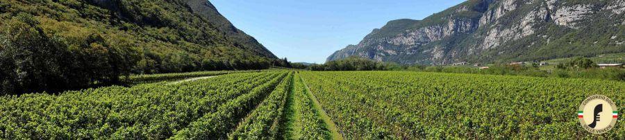 Il Pinot grigio al The Wine & Spirits Show