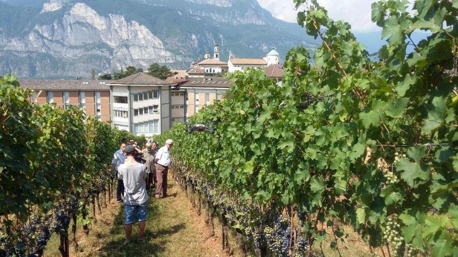 11 Giornata tecnica della vite e del vino