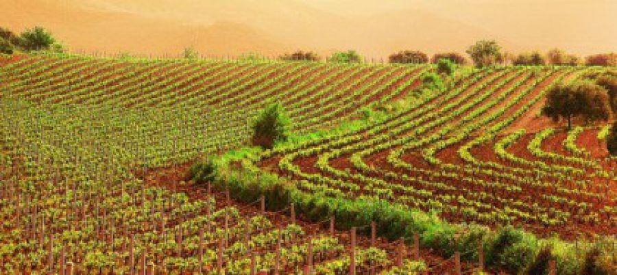 USA, formazione e promozione per il vino italiano