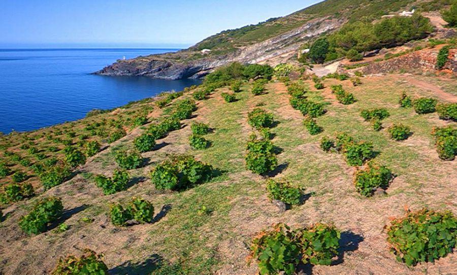 Tutto il sapore delle uve di Pantelleria