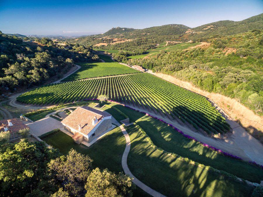 Nove vini per raccontare un'isola