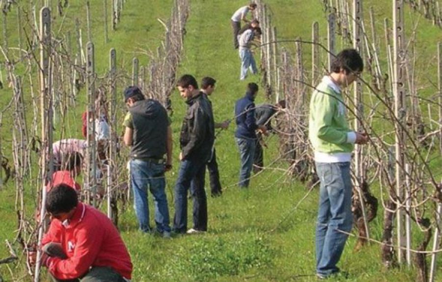 Da Leonardo Da Vinci alla viticoltura piacentina di oggi