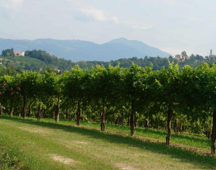 Un'armonia di uva, terra e sole