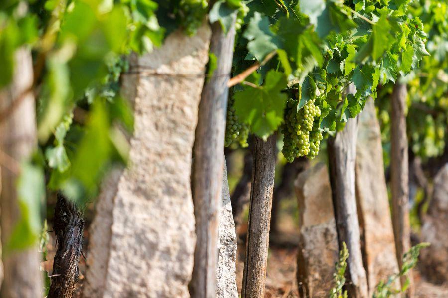 170 anni di vino e olio