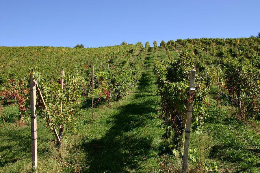 Le Città del Vino festeggiano i 50 anni delle Doc Ghemme Boca, Fara e Sizzano della provincia di Novara