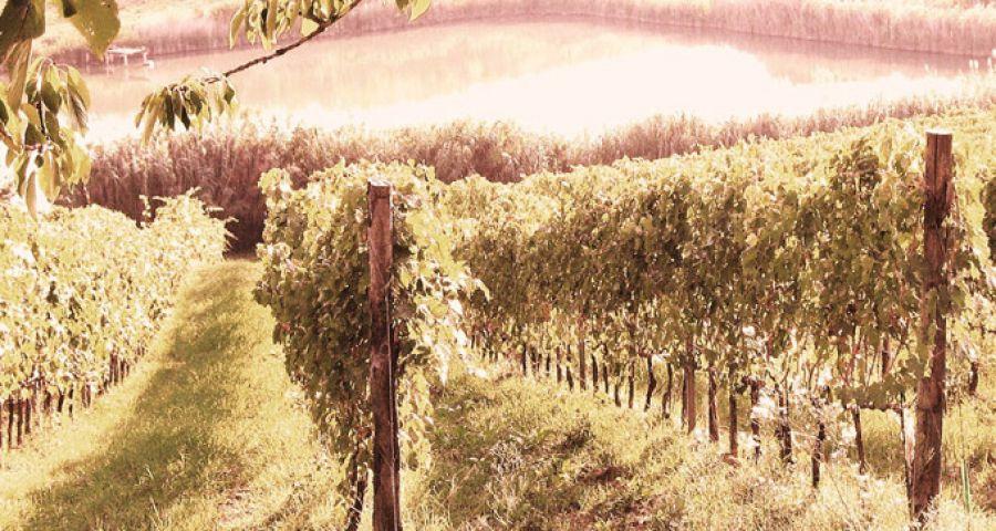 Cresce il consumo di vini biodinamici in Italia