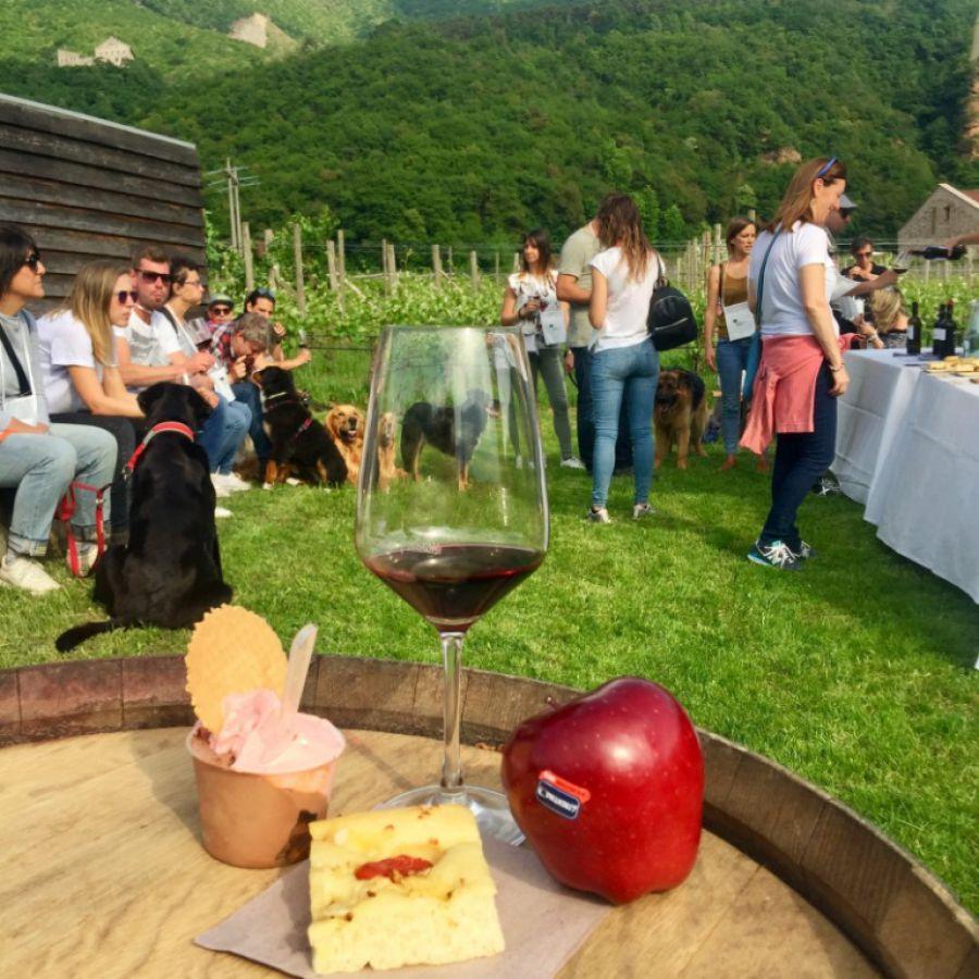 Gemme di gusto in Trentino