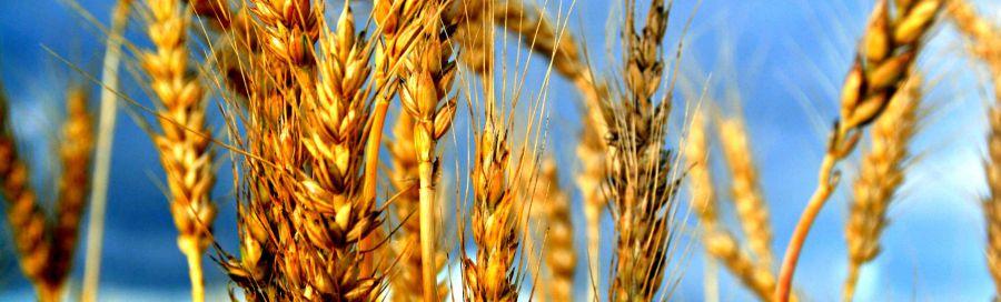 Giovani e agricoltura, indagine di Nomisma