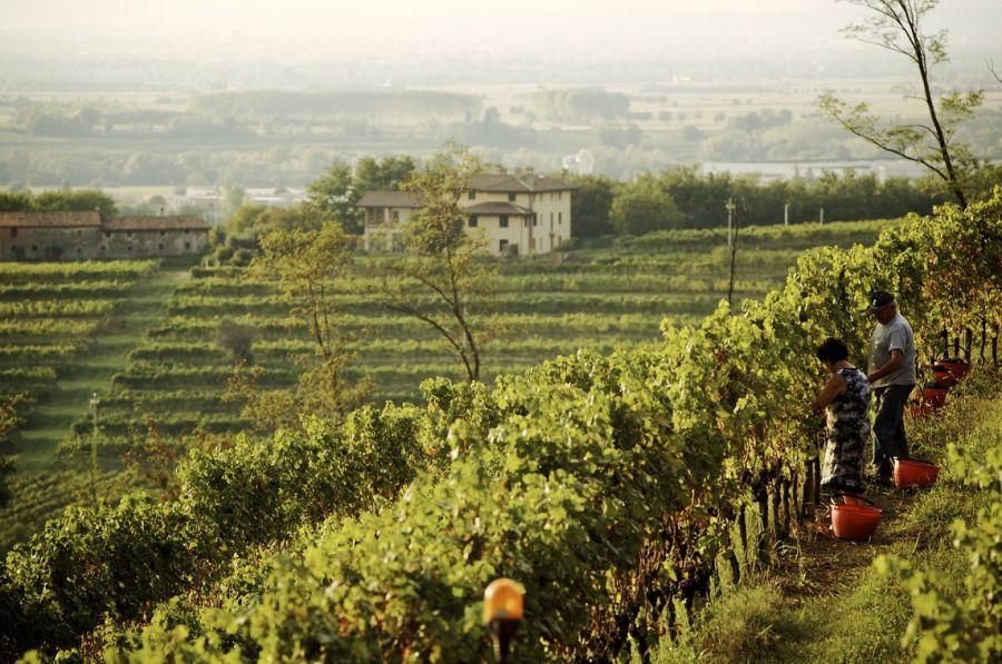 La voce della Strada del Vino e dei Sapori del Friuli Venezia Giulia