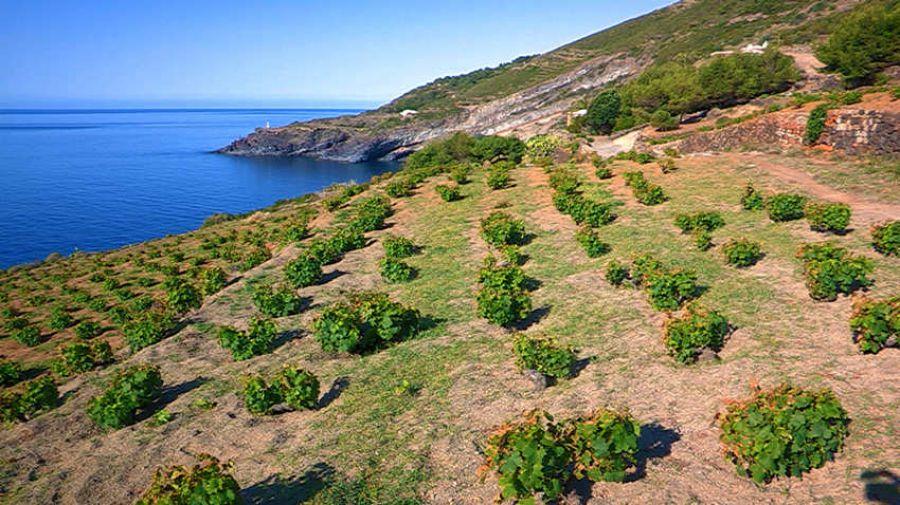 Pantelleria: più tutela e promozione per affrontare il mercato