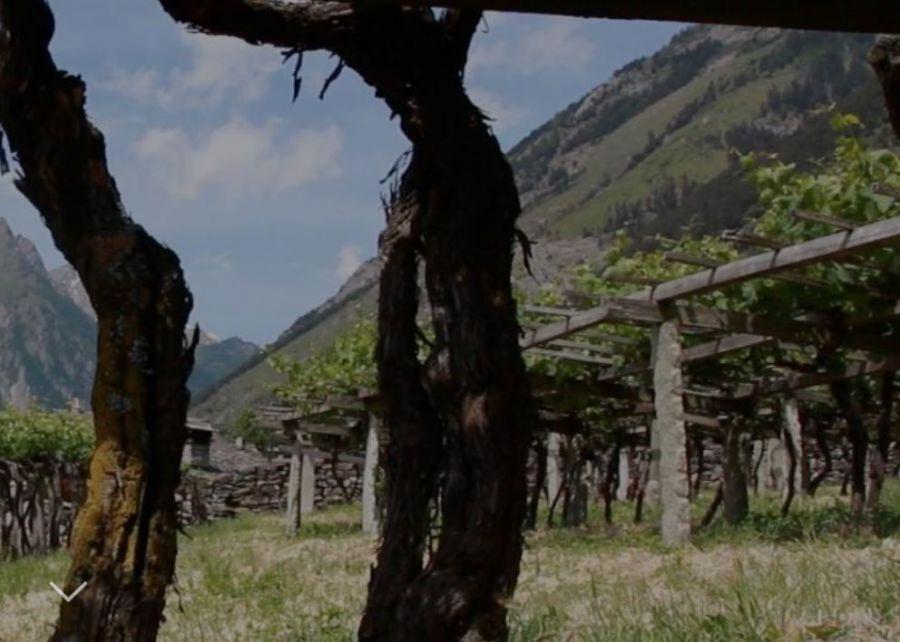 III edizione di Vins Extrêmes
