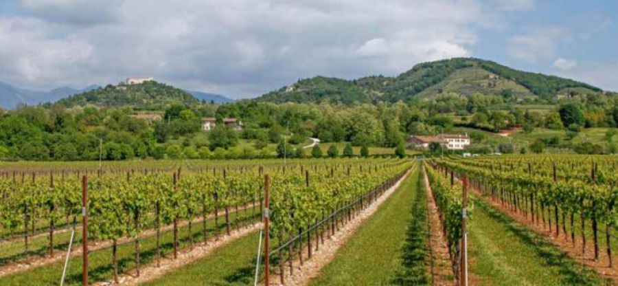Buone pratiche per una viticoltura responsabile e sostenibile