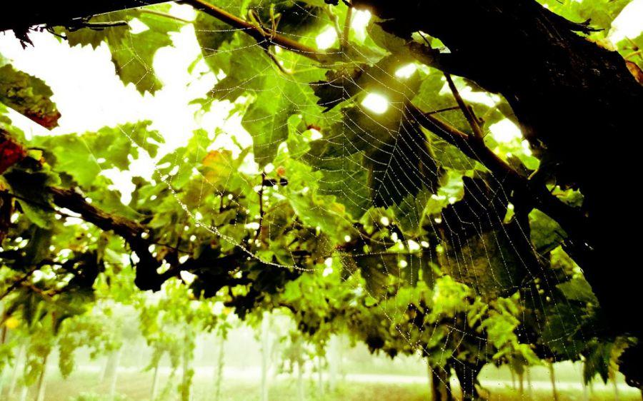 Bollicine green per l'estate