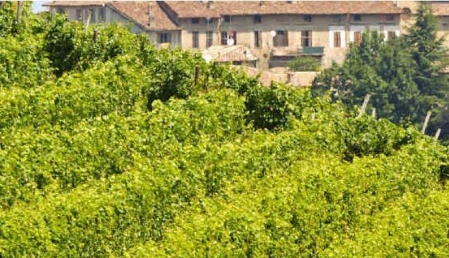 Vino e farfalle nell'Oltrepo'Pavese