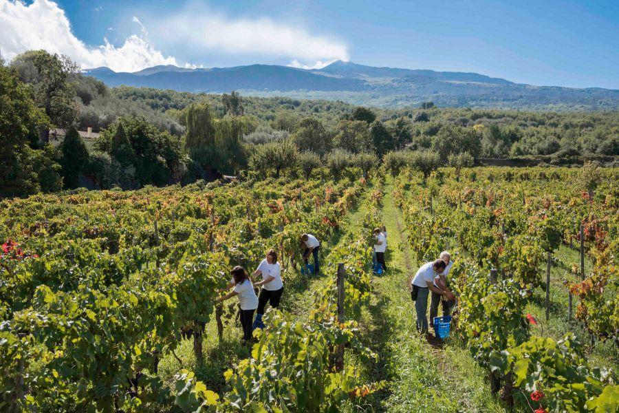 Alla scoperta del vino dell'Etna
