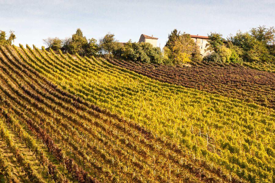 Arte contadina, viticoltura eroica
