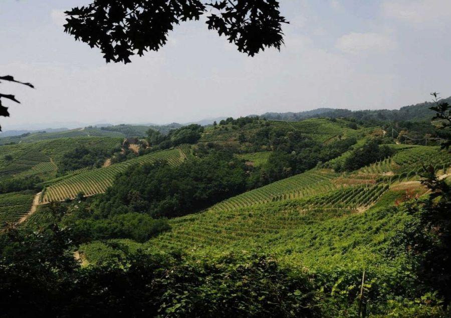L'anima country di The Grand Wine Tour