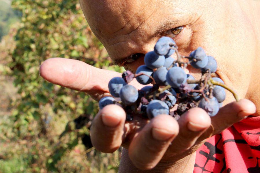 Back to the Wine: gli artigiani del vino