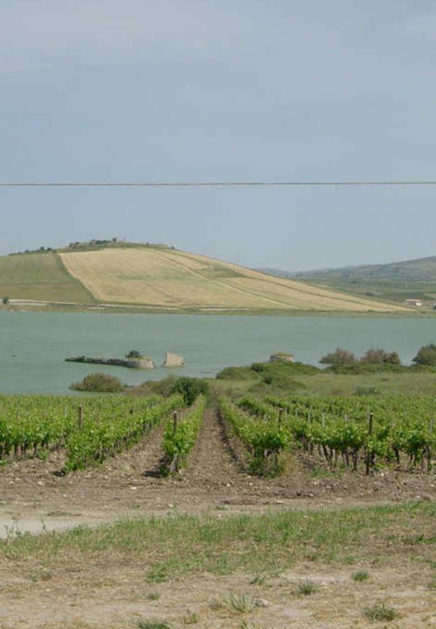 La Viticoltura italiana è nata in Sicilia