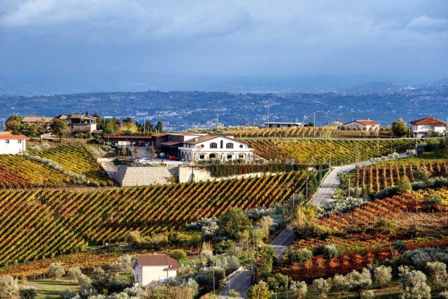 Un secolo di passione per il vino