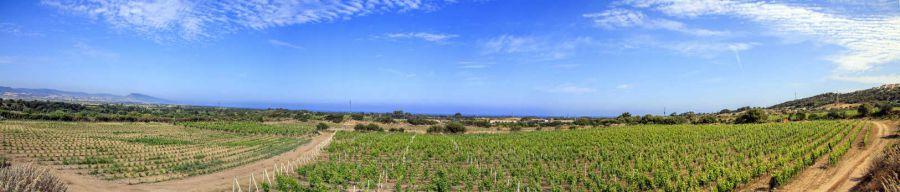 I vini che hanno il sapore del mare