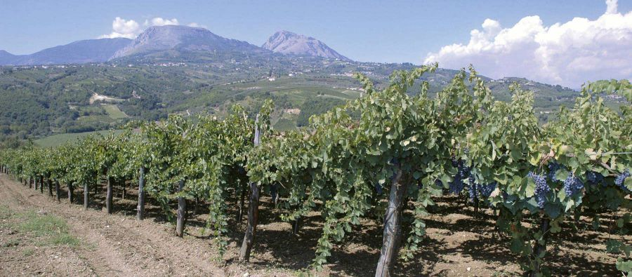 Il vino che 'nfoca o core