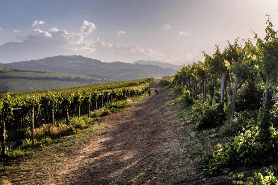 I vini abruzzesi crescono in Italia e all'estero
