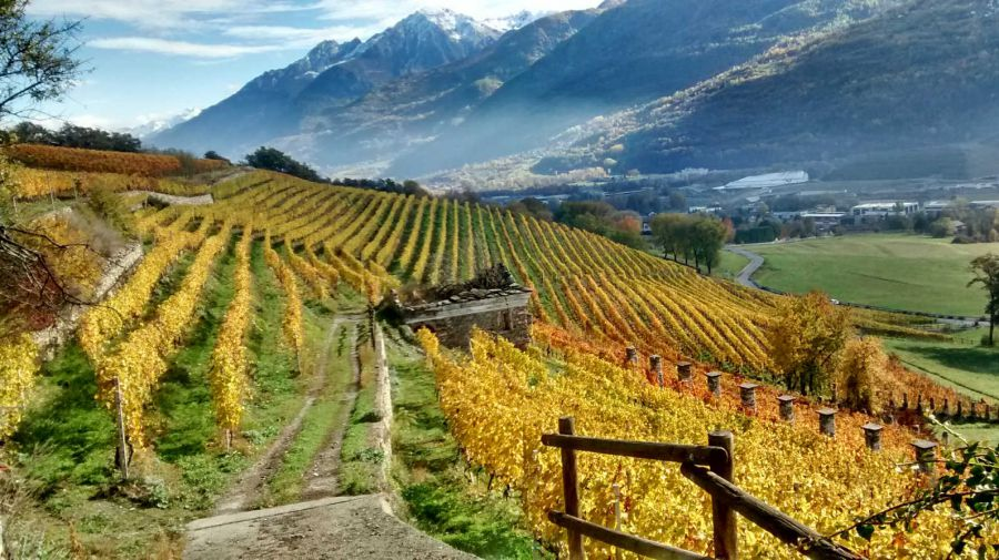 Vini Biologici in Valle d'Aosta