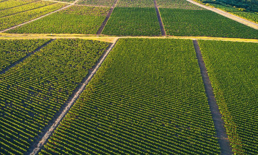 PROiNOS: coltivare la sostenibilita'