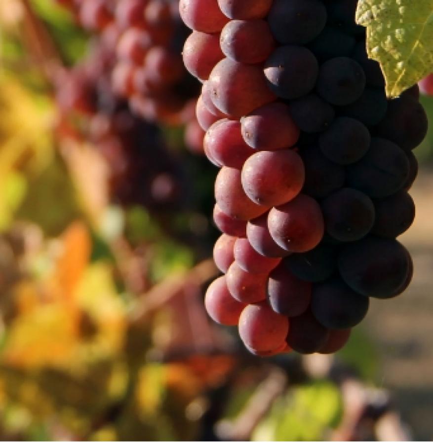 Il Pinot grigio al Wine Paris/Vinexpo