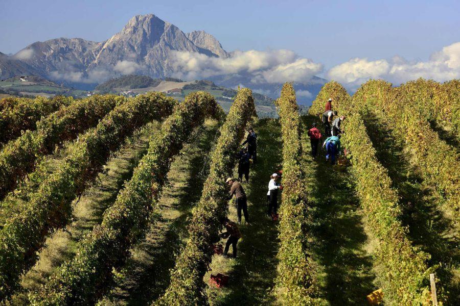 L'Abruzzo si racconta attraverso i suoi vini